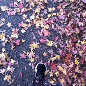 紅葉や枯れ葉