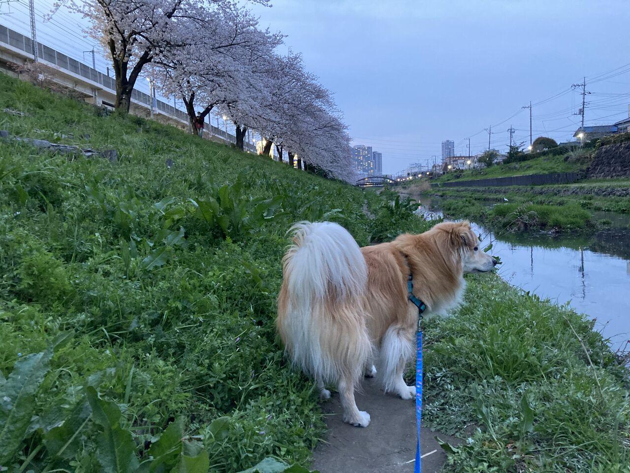 河川敷を散歩する