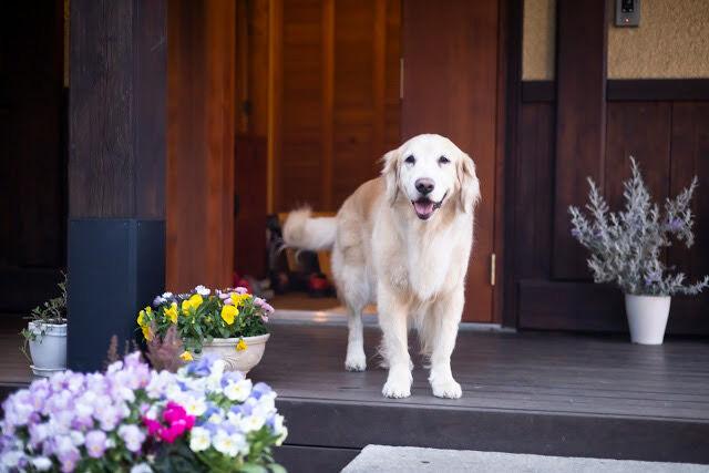 笑顔で玄関に立つリボン