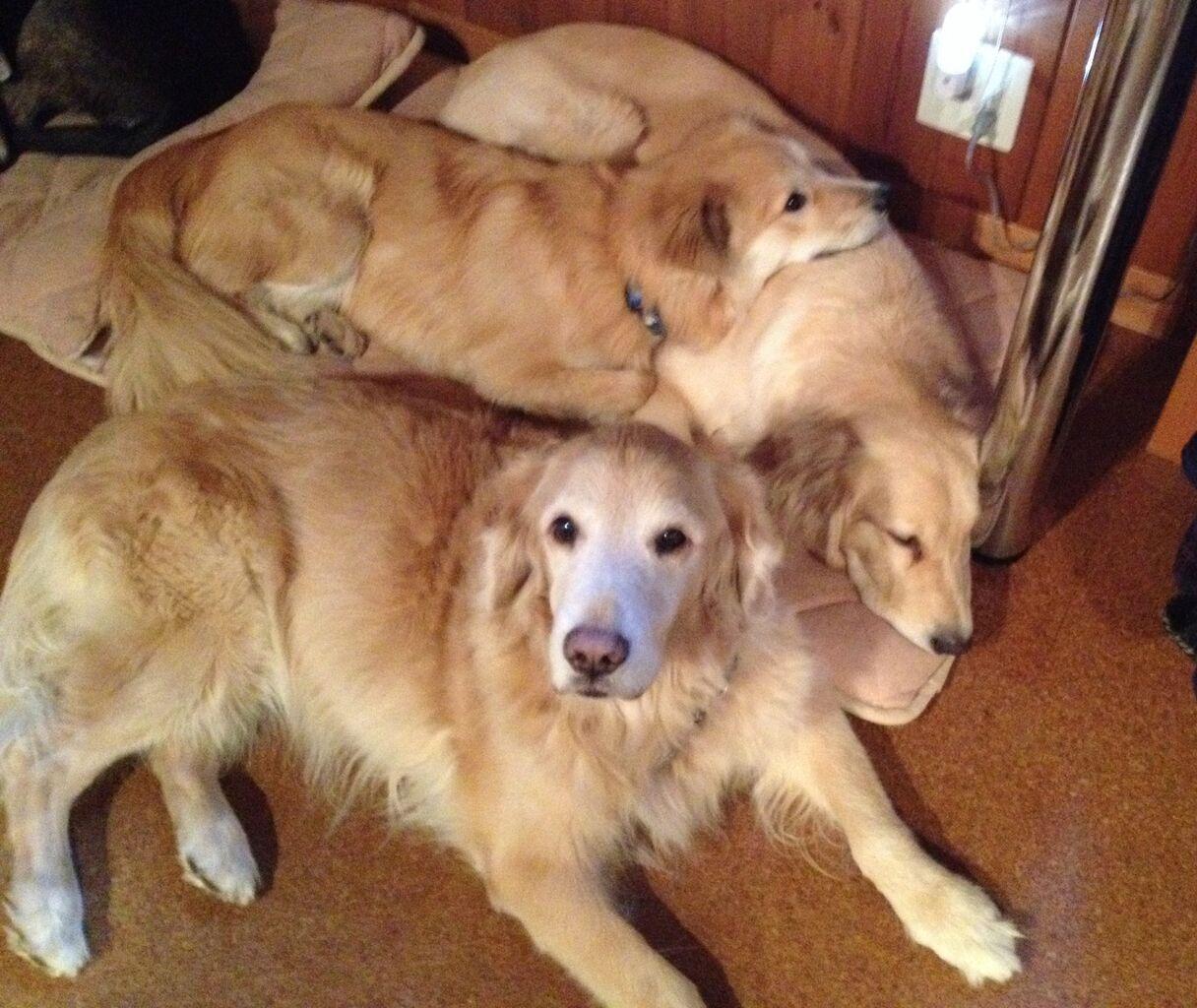 三匹なかよく寝る