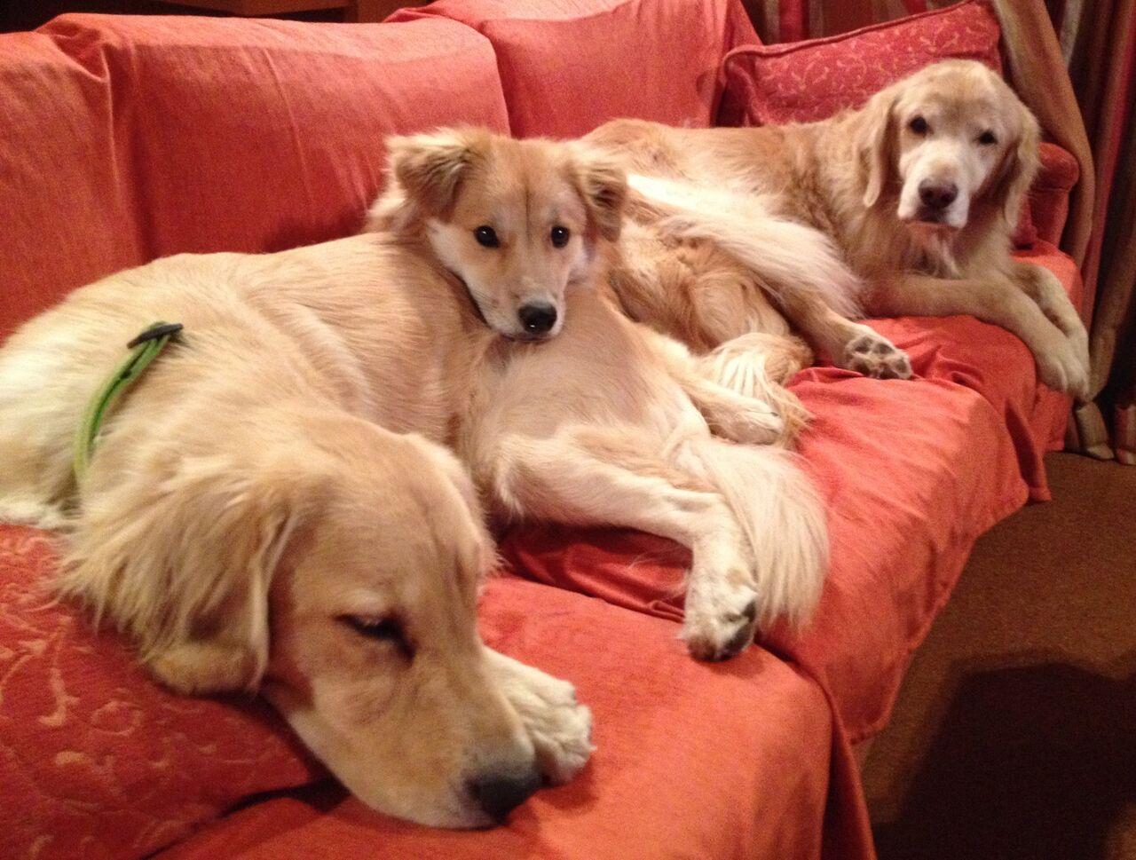 三匹仲良くソファに座る