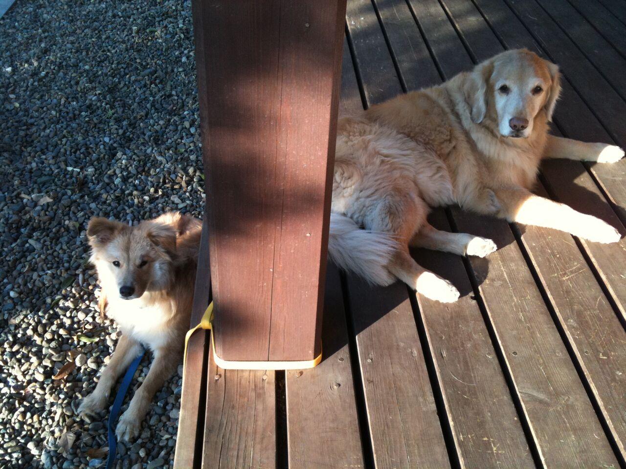 軒先でお座りする犬