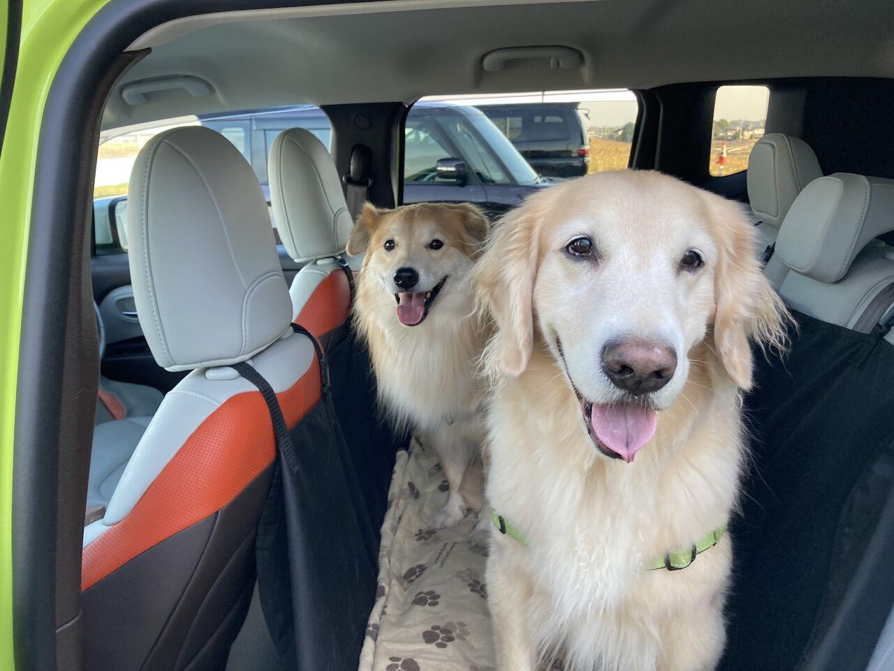 一緒に車に乗る